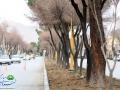 گزارش تصویری / روایتی از اقدام و تلاش در حوزه فضای سبز شهری