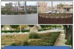زیباسازی سیما و منظر شهری با کاشت گونه های گیاهی مختلف