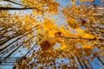 پاییز هزار رنگ مبارکه