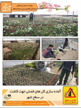 آماده سازی گلهای فصلی جهت کاشت در سطح شهر