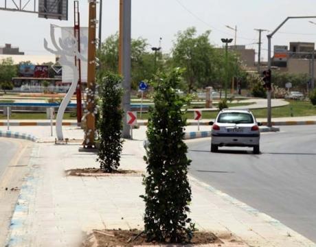 گزارش تصویری / روایت تلاش در حوزه فضای سبز شهری /کاشت درختچه های بلوار معلم