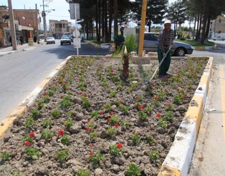 گزارش تصویری / روایت تلاش در حوزه فضای سبز شهری /کاشت گل های فصلی در سطح شهر