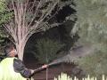 عملیات سمپاشی درختان سطح شهر و بوستان ها در حال انجام است