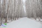 بوستان ساحلی سرارود/فصل زمستان