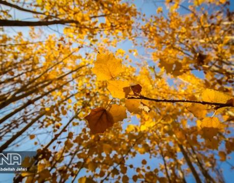گزارش تصویری / پاییز هزار رنگ مبارکه